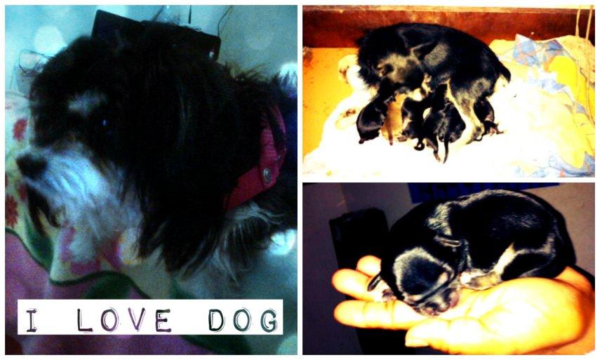 collage.jpg dog