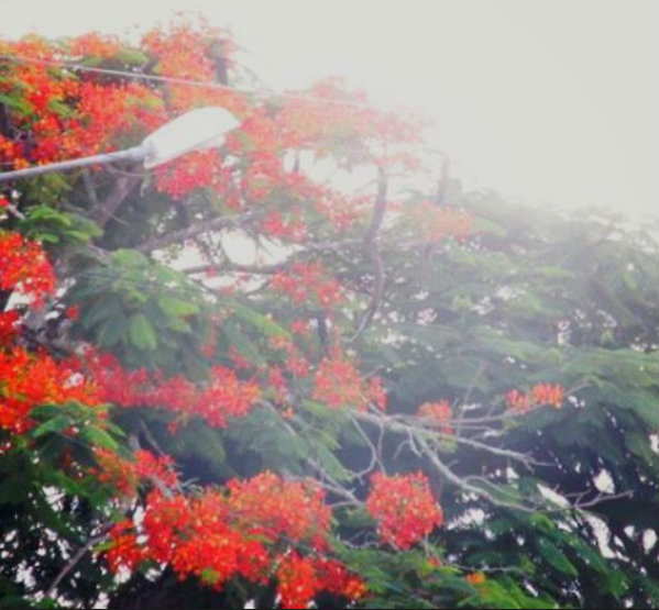 paisagem de flor