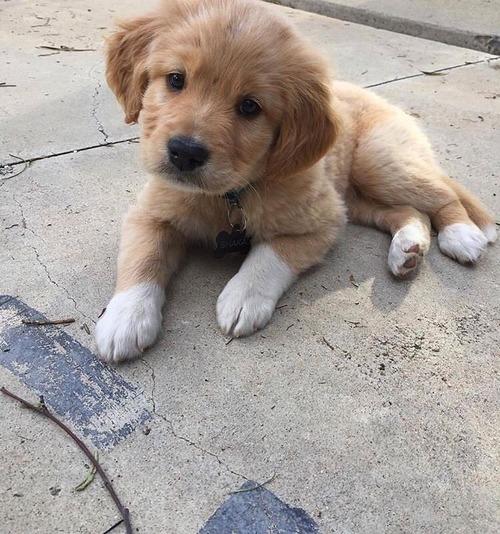 adote-um-filhote-cachorro