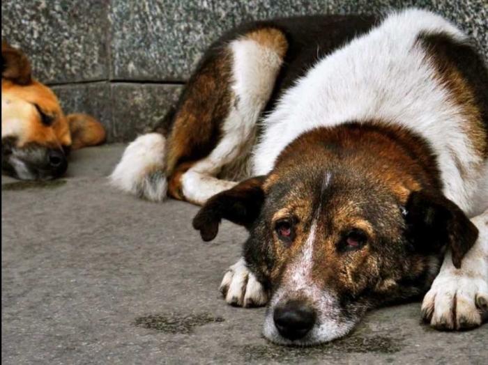 cachorro-de-rua