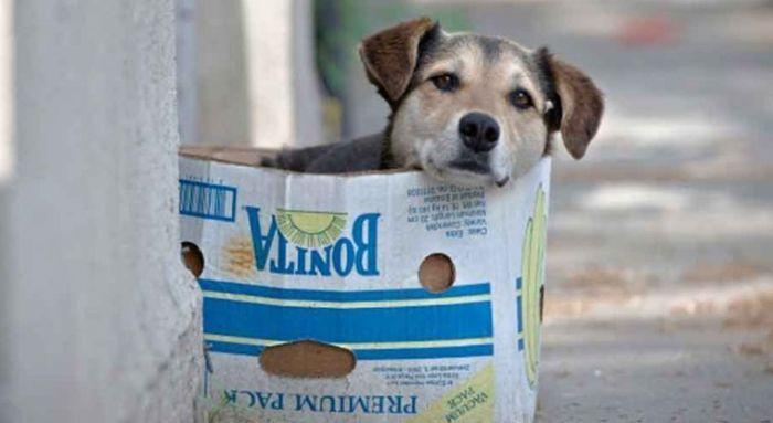 perros-callejeros-portada-kkk_594723958